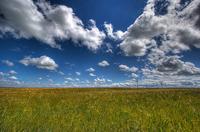 Grassandcloud