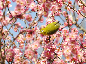 Birdonplum_2